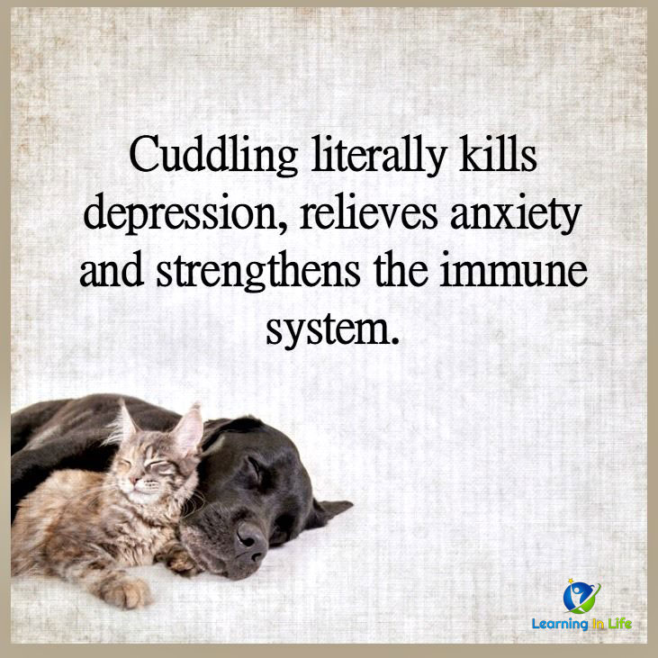 Photo of Cuddling