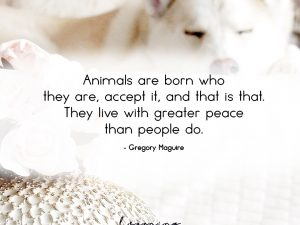 Animals are born who they are…