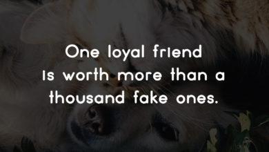Photo of One loyal friend…