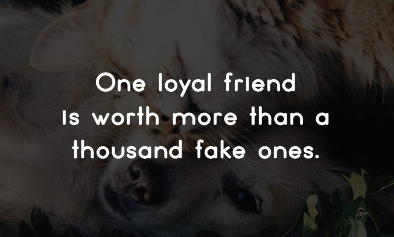 Photo of One loyal friend…